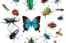 Watercolor insects and bugs clipart pac | Design Bundles