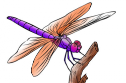 Free Image Dragonfly, Download Free Clip Art, Free Clip Art ...