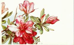 CatnipStudioCollage-: Free Vintage Clip Art - 1910 Christmas ...
