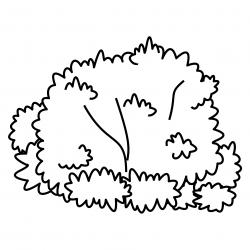 Shrub clipart black and white - Pencil and in color shrub clipart ...