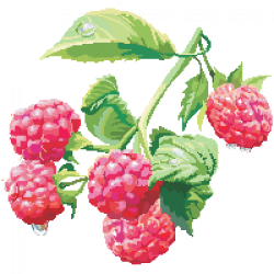 Download Raspberry Free PNG photo images and clipart | FreePNGImg
