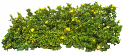 Shrub clipart tree background - Pencil and in color shrub clipart ...