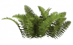 Download Shrub Bushes Free PNG photo images and clipart | FreePNGImg