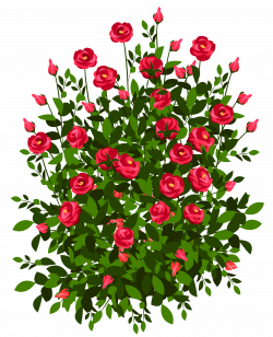 Red Rose Bush PNG Clipart Picture | Gallery Yopriceville - High ...