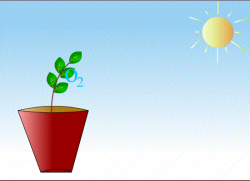 Plants clipart classroom GIF - shared by Landalsa on GIFER