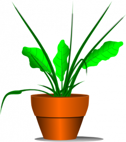 Free Plant Clipart - Graphics of Plants