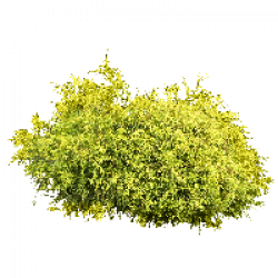 Download Bush Free PNG photo images and clipart | FreePNGImg