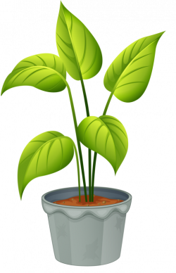 green home plant | ✿° my garden valley ° ✿ | Pinterest | Plants ...