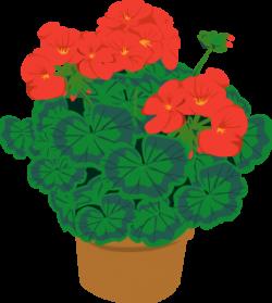 Geranium In Pot Clip Art at Clker.com - vector clip art online ...