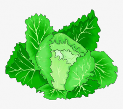 Cartoon Green Cabbage Vegetables, Green Vegetables, Cabbage, Food ...