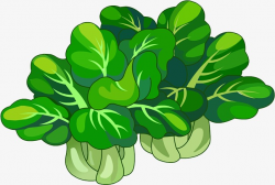 Chinese Cabbage, Green, Food PNG Image and Clipart for Free Download