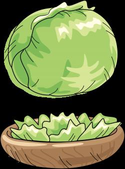 Cabbage Watermelon Vegetable Cartoon Clip art - Green cabbage 3700 ...