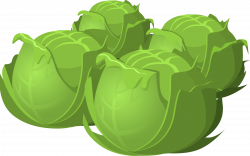 Food Cabbage Icons PNG - Free PNG and Icons Downloads