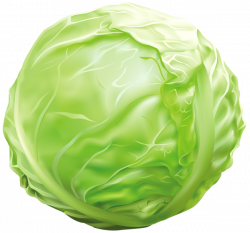 Cabbage PNG Clipart Image | Graphics | Pinterest | Clipart images ...