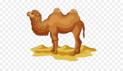 Wild Bactrian camel Drawing Cartoon Clip art - Desert Camel Yellow ...