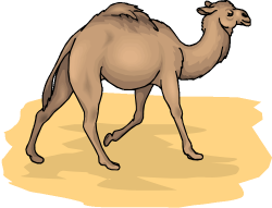 Free Camel Cliparts, Download Free Clip Art, Free Clip Art on ...