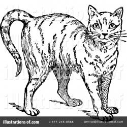 Cat Clipart #1135202 - Illustration by Prawny Vintage
