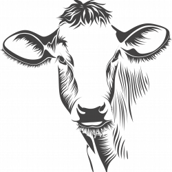 Off Family Ranch – Happy Cows Since 1874