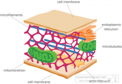 Science Clipart- cytoskeleton-cell-membrane-clipart - Classroom Clipart