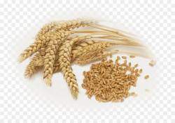 Wheat Cartoon clipart - Agriculture, Food, transparent clip art