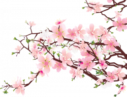 Branches of Cherry Blossoms - ClipArt Best - ClipArt Best | Home ...