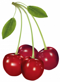 Cherries PNG Clipart Picture | Gallery Yopriceville - High-Quality ...