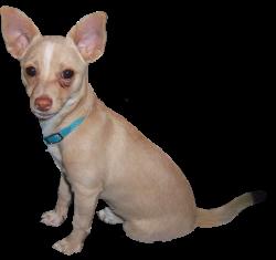 Dog Clip Art - Dog Cartoon Illustrations & Sketches