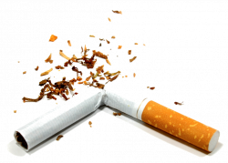 28+ Collection of Cigarette Clipart Transparent Background | High ...