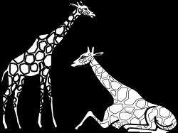 zebra-clipart-black-and-white ...