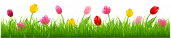 Grass with Colorful Tulips PNG Clipart   Spring   Pinterest ...