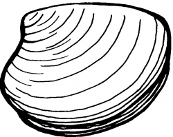 Clam Free Clipart