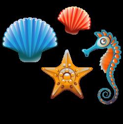 Clam Seashell Cartoon Clip art - Sea shells and creative class 877 ...