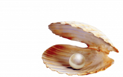 Pearl In Shell transparent PNG - StickPNG