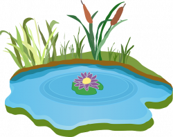 Free Image on Pixabay - Pond, Water, Outdoor, Grass   Pinterest ...