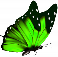 Green Butterfly PNG Clipart Image | Wings | Pinterest | Clipart ...