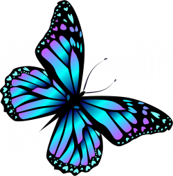 Image result for cartoon bugs and butterflies   butterfly ...