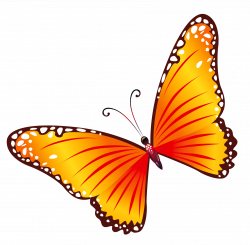 Transparent Orange Butterfly PNG Clipart | all things beautiful ...