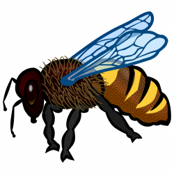 Clipart - Bee (colour)