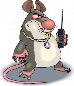 Fancy rats: a note of caution