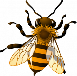 Honey Bee Clipart - Clipart Kid | Bees | Pinterest | Bee clipart and ...