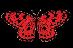 Butterflies butterfly clip art butterfly clipart - Clipartix ...
