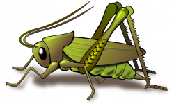 images of crickets - Google Search | thicket full uh crickets ...