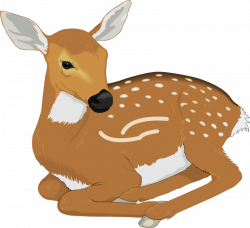 Deer Animal Clipart Pictures Royalty Free | Clipart Pictures Org