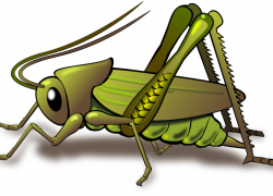 Cricket bug clipart cricket stylized clipart misterbug on deviantart ...