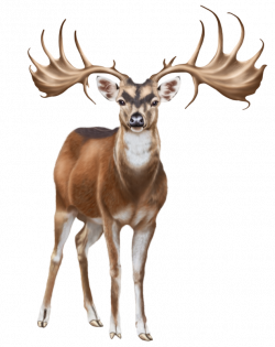 Deer PNG Clip Art - Best WEB Clipart