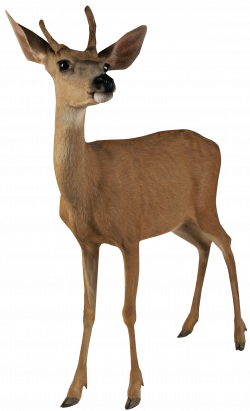 Deer Roe PNG Picture | Gallery Yopriceville - High-Quality Images ...