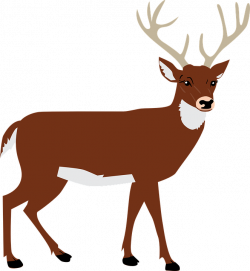 Free Image on Pixabay - Hart, Antlers, Forest, Animal | Antlers ...