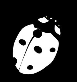 realistic ladybird drawing - Google Search | Eddie | Pinterest ...