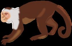 Clipart - White-faced Capuchin Monkey