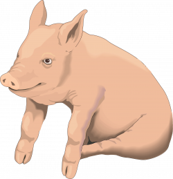 Pig Clipart | Isolated Stock Photo by noBACKS.com